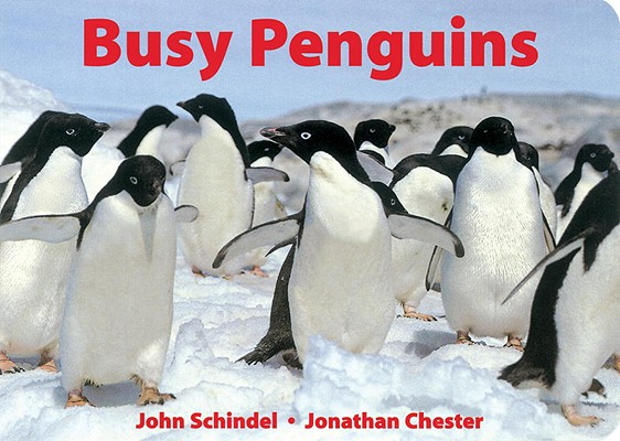 Busy Penguins By Schindel, John/ Chester, Jonathan (PHT)